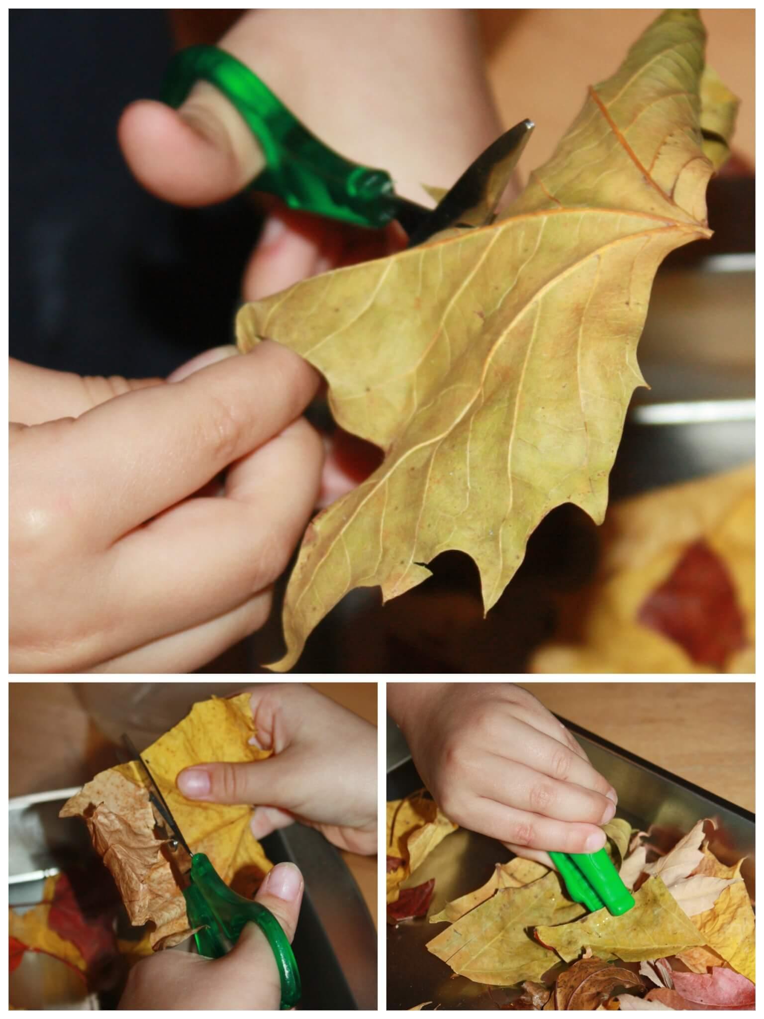 Leaf Activities Fine Motor Science