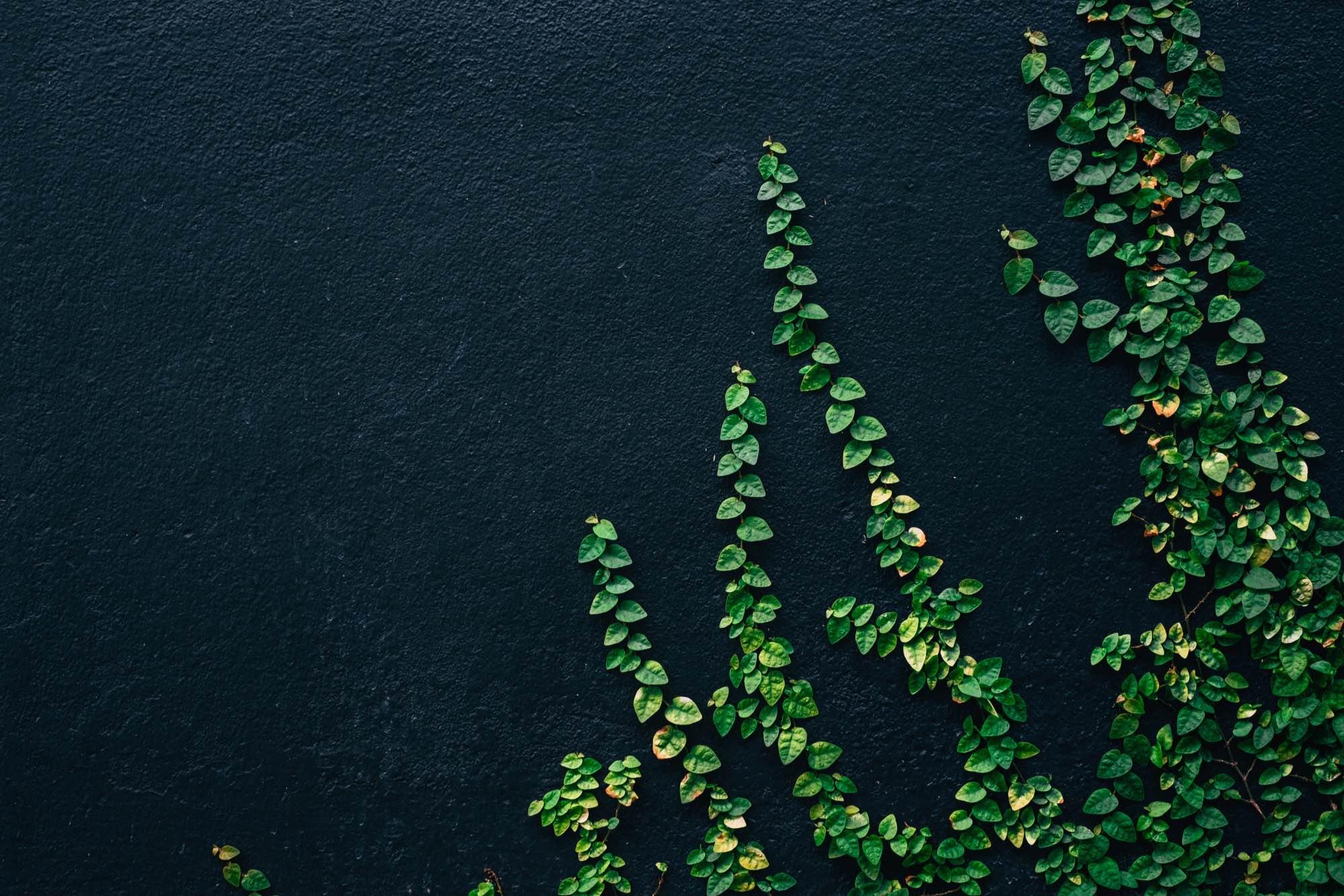 groene voornemens
