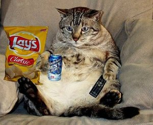 couch-potato-cat fat