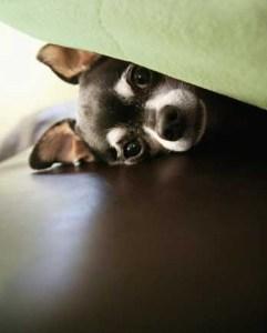 peek puppy