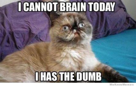 i-cannot-brain-today-i-has-the-dumb-cat