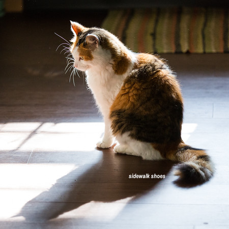 Calico cat sitting on a sun patch on a wood floor-via sidewalk shoes