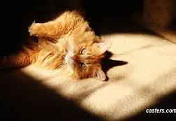 Yellow cat rolling on a carpet bathed in sunlight-via casters.com