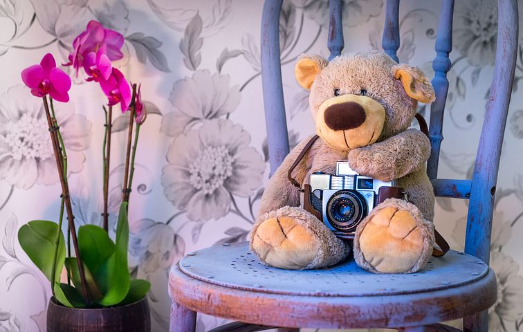 pixaby teddy with camera on periwinkle blue chair