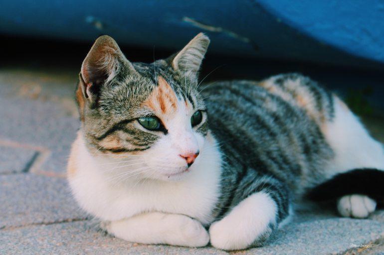 max-berger-cat-tile-floor