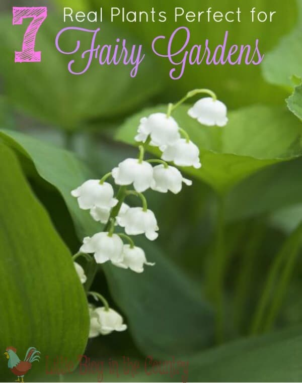 7 Real Plants Perfect for Fairy Gardens