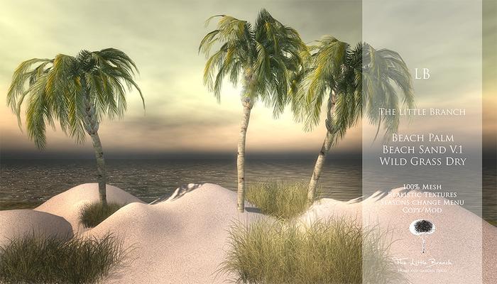 lb_beachpalm
