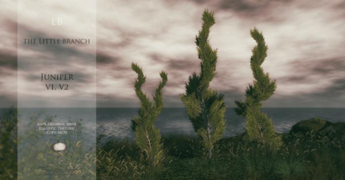 little-branch-juniper-v1v2