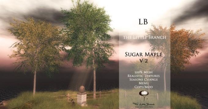 the_little_branch_sugar_maple_v2