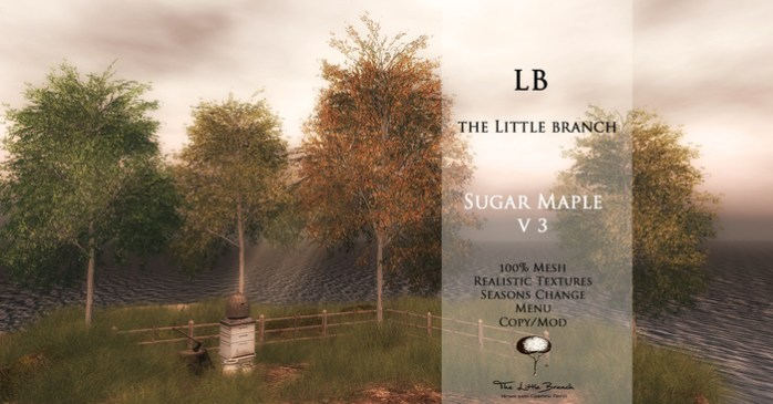 the_little_branch_sugar_maple_v3