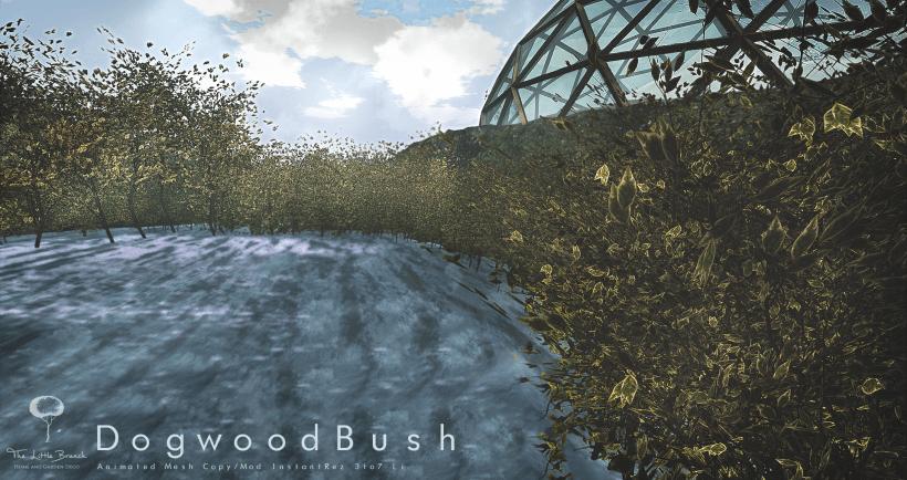 DogwoodBush