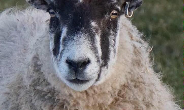lanolising wool, puddle pads and mattress protectors
