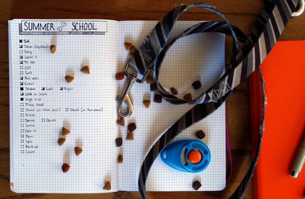 How to Train your Puppy using the Bullet Journal Equipment detail | Littlecoffeefox.com