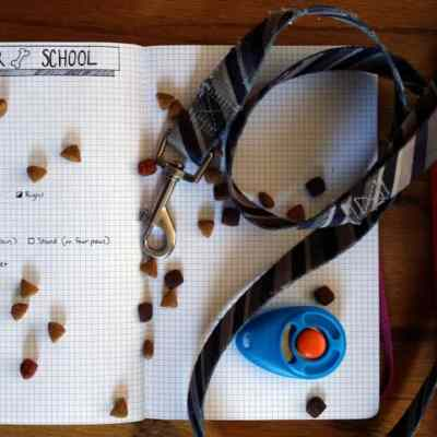 How to Train your Puppy using the Bullet Journal Equipment detail   Littlecoffeefox.com