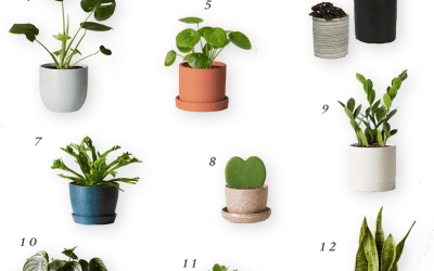 Real Potted Plants for the Nursery or Kid's Room
