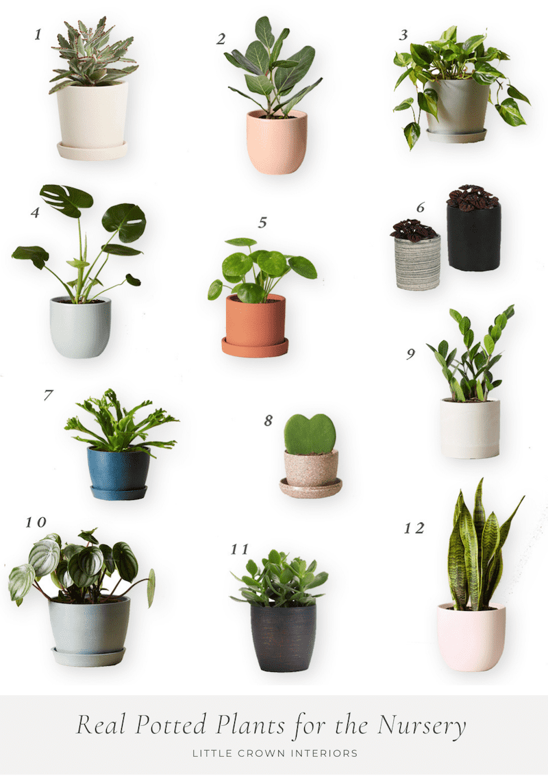 Potted Live Plants for the Nursery