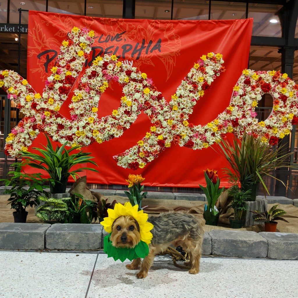 A dog wearing a hat that looks like a sunflower with his face in the center stands in front of a sign made of flowers that says XOXO.