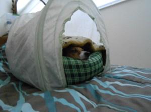 misha blanket_20131017_1908DSCN2561