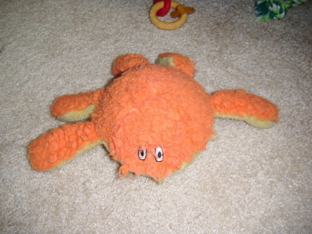 Many of Misha's dog toys are amputees.