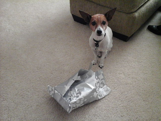 dog unwraps Christmas present