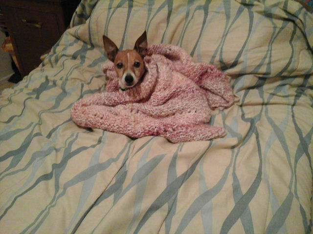 Tired dog under blanket