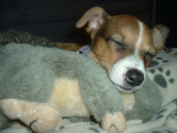 dog sleeps with squirrel toy