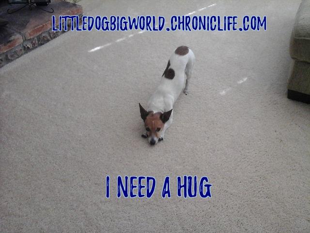 dog waiting for hug