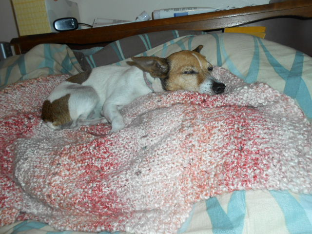dog resting on bed pillow