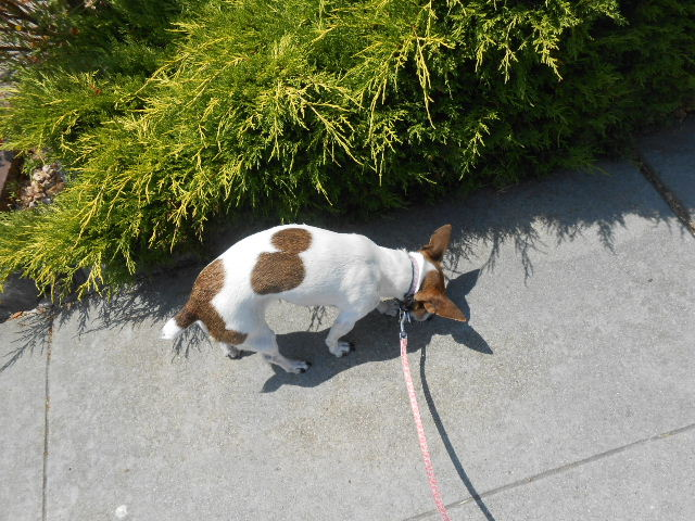 dog sniffing cement walk
