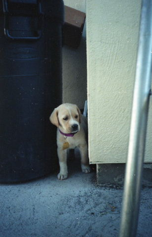 cute puppy looking around corner