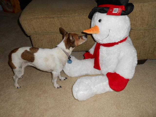 dog sniffs snowman toy