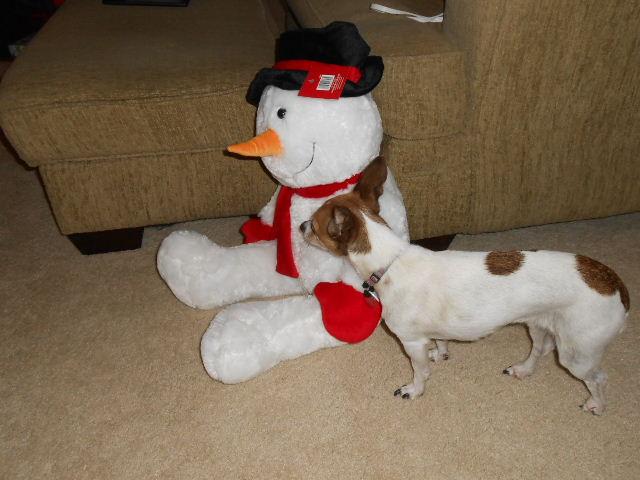 dog standing behind snowman