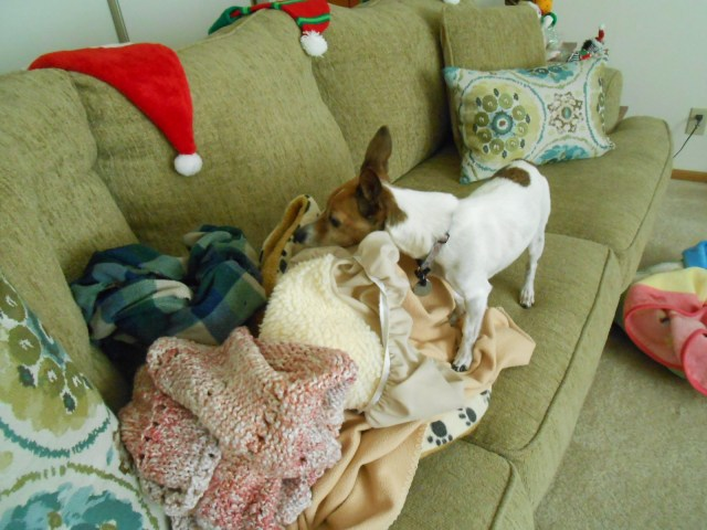 dog sniffing clean blankets