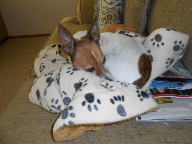 dog sleeping on her heat reflecting blanket