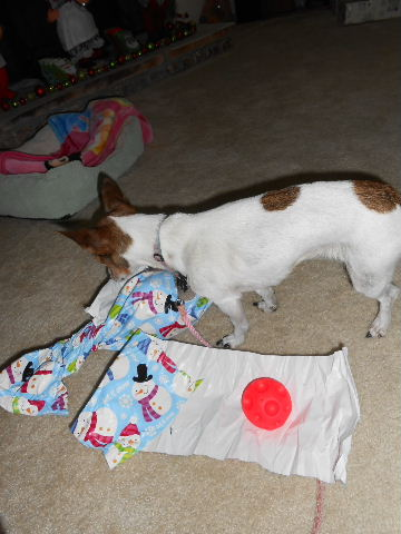 dog tries to get human to open her presents