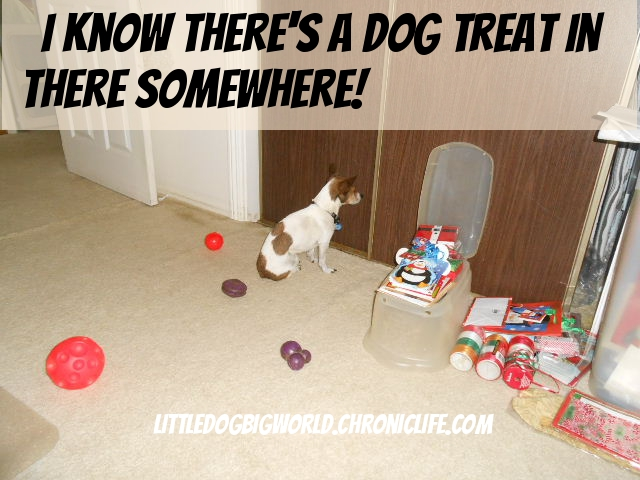 dog holding vigil for treat lost in closet