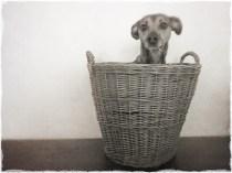 Bark in a Basket
