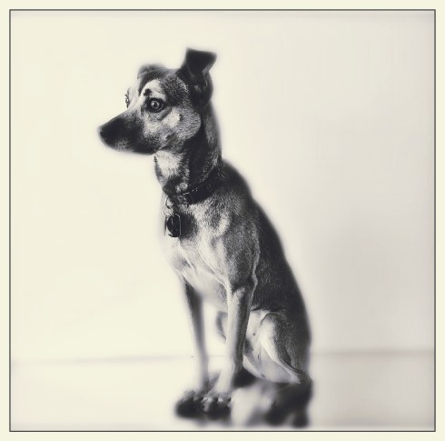 Portrait of a Feist