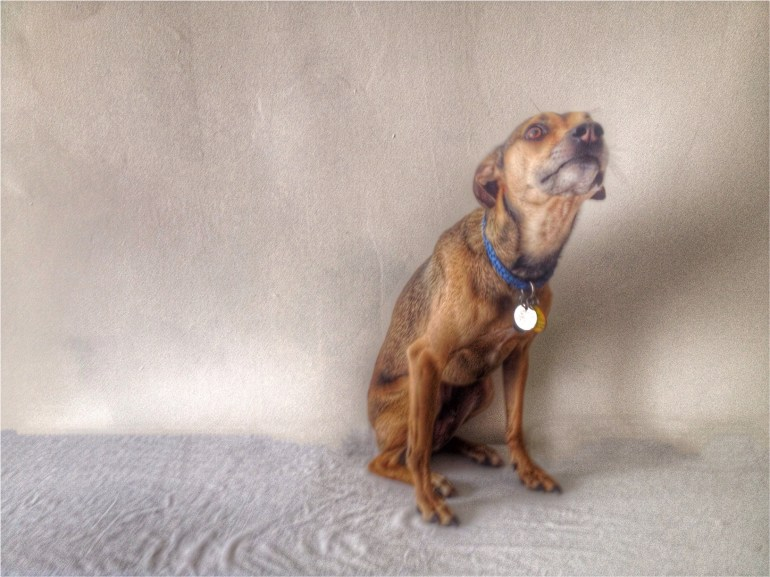 My Little Dog-HDR