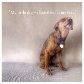 My Little Dog-Text
