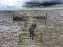 Dog & Dock