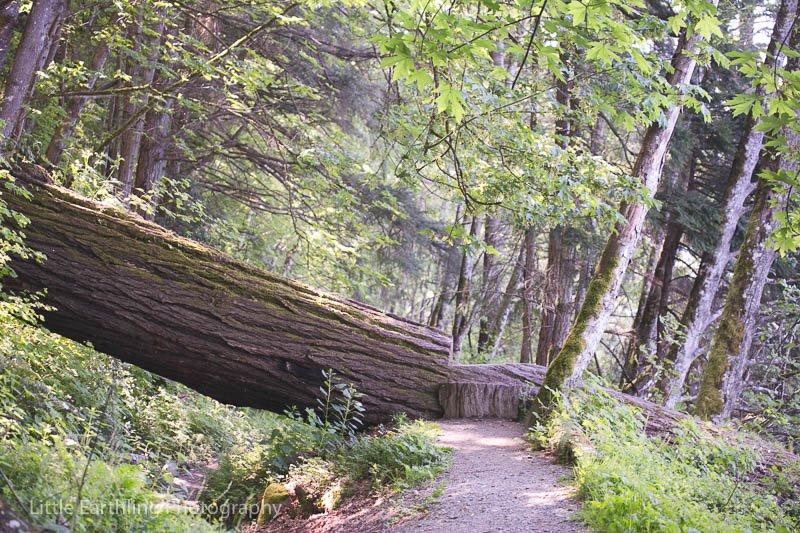 Pacific Northwest hiking, Bellingham, WA