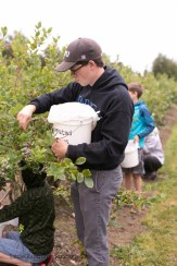 blueberry-picking-2216