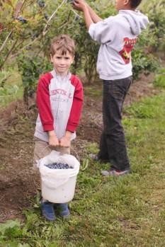blueberry-picking-2248