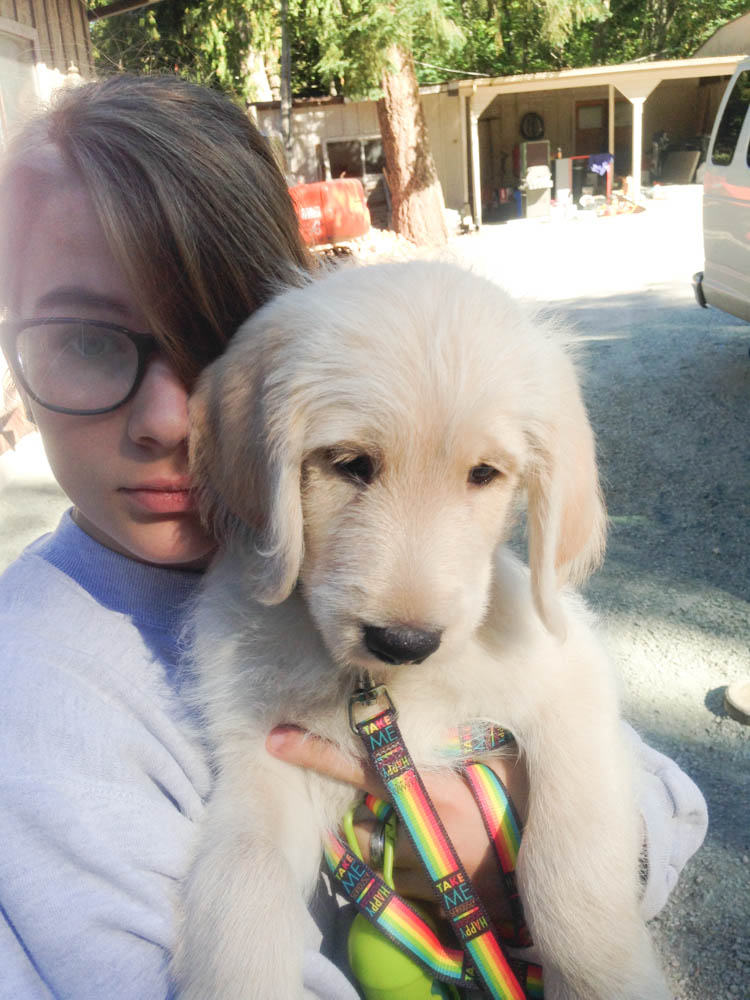 Frodo the future service dog is a labradoodle who will be trained to assist my son with FASD.