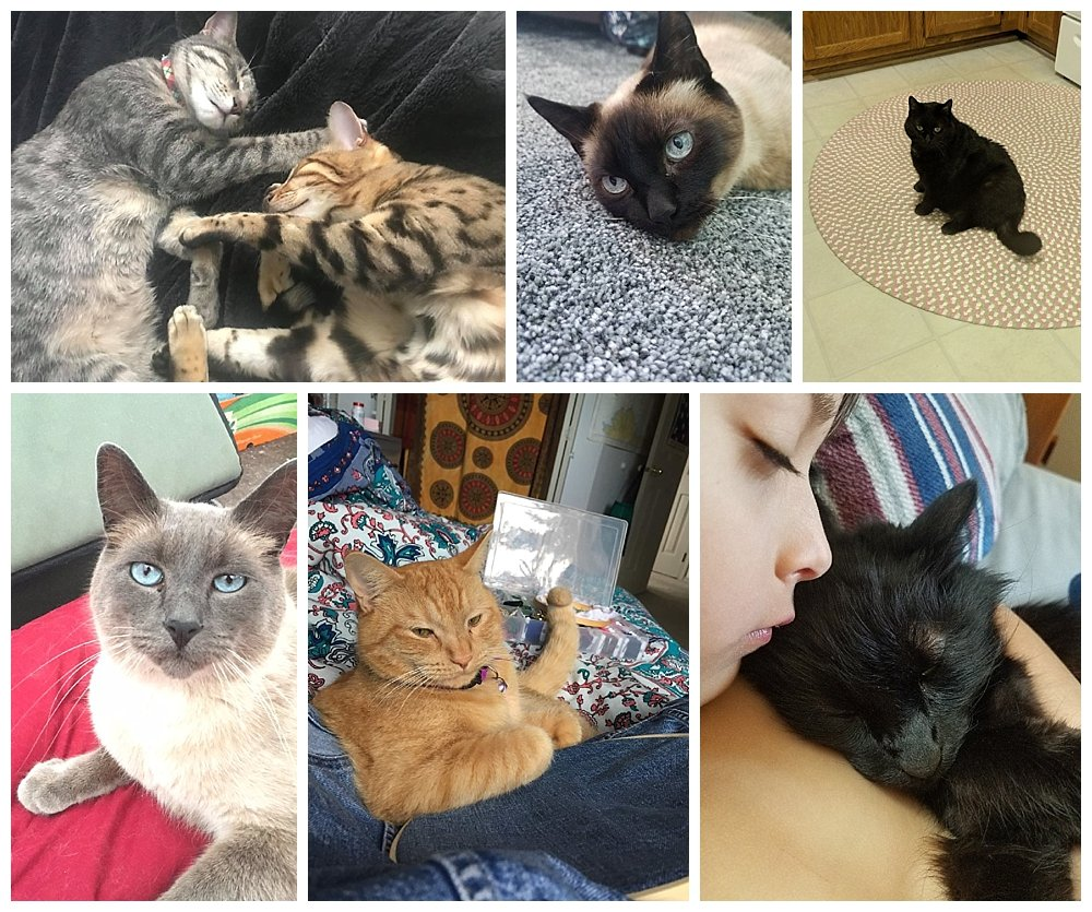 Signs you are becoming a crazy cat lady.
