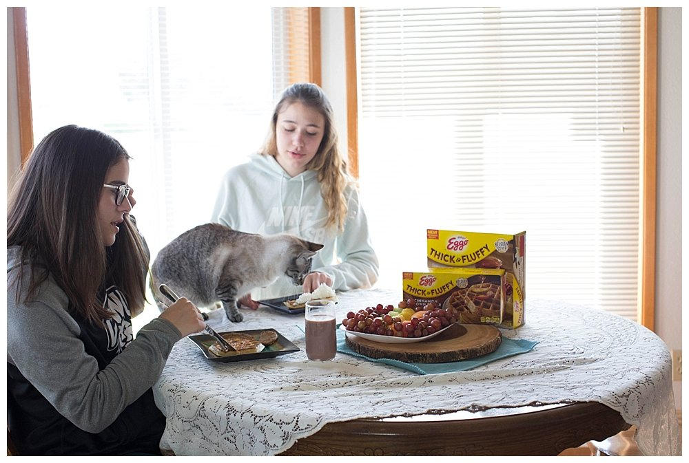 Cats on the table should be illegal.