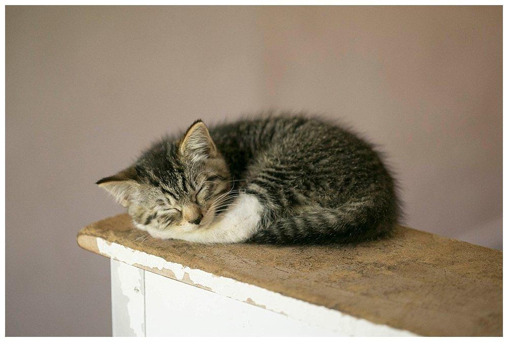Mordecai's kitten Esme.