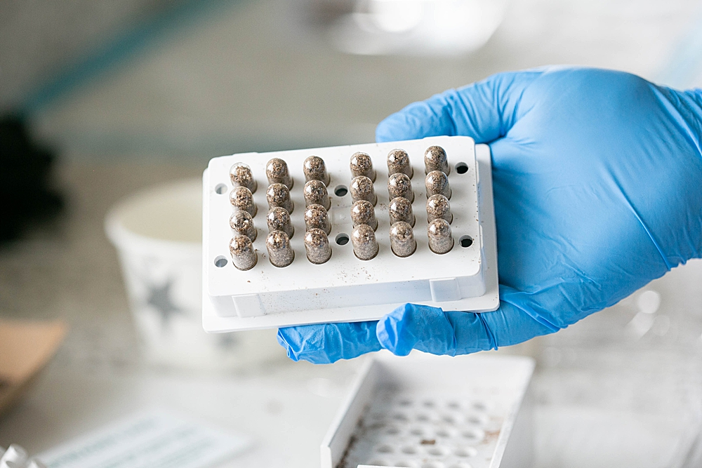 Placenta encapsulation is a growing trend in the United States.