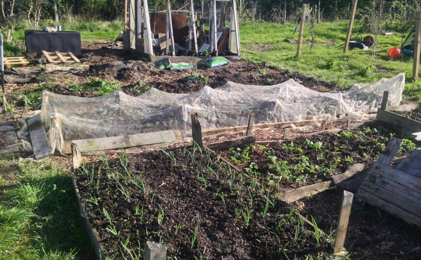 Allotmenting pt. II – A quick update